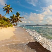 Gefühl von Urlaub: Strand, Meer und Palmen.